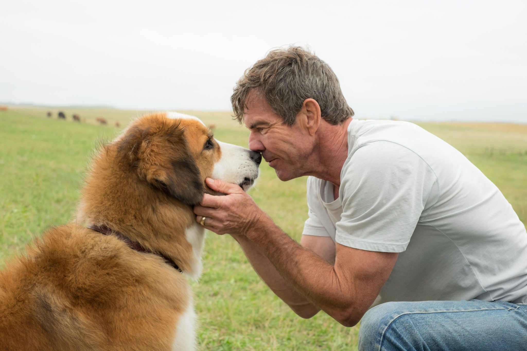 First Look: A Dog's Purpose Poster