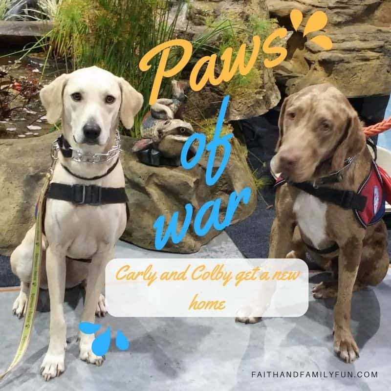 Two Military Veterans to Get Life-Changing Gift from Paws of War